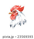 Rooster 2. Watercolor illustration. Isolated  23569393