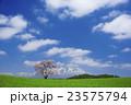 小岩井農場 エドヒガン 春の写真 23575794