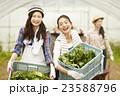 農業女子 作業風景 23588796