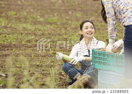 農業女子 ポートレート 23588905