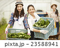 女性 3人 農業女子の写真 23588941