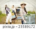 女性 3人 農業女子の写真 23589172
