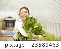 農業女子 ポートレート 23589463