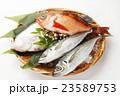 魚 鮮魚 海水魚の写真 23589753