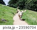 六甲山牧場  23590704