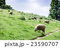 六甲山牧場  23590707