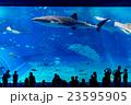 【沖縄県】美ら海水族館 23595905