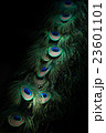 孔雀の羽 23601101