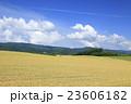 北海道 美瑛町 広大な麦畑と積雲 23606182