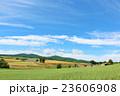 夏 北海道 丘の写真 23606908