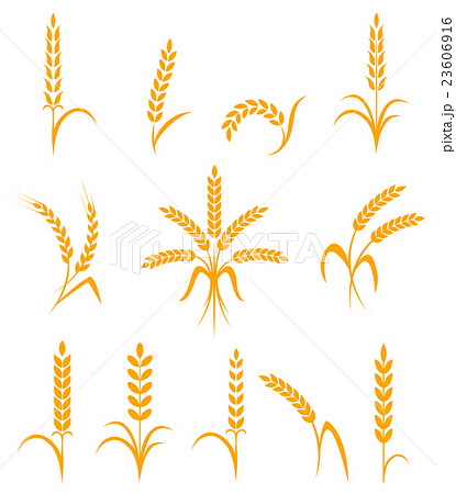 Wheat ears or rice icons set. Agricultural symbolsのイラスト素材 [23606916] - PIXTA