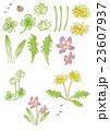 公園の草花と昆虫 23607937