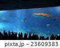 美ら海水族館 23609383