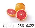 グレープフルーツ 23616822
