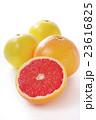 グレープフルーツ 23616825
