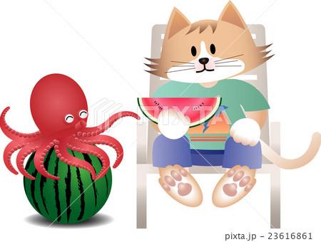 猫とタコ夏_b01 23616861