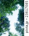 光芒 陽射し 空の写真 23617085