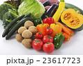 野菜 食材 緑黄色野菜の写真 23617723