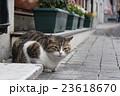 イスタンブールの街角猫 23618670