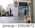 イスタンブールの街角ねこ 23618672