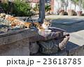 イスタンブールの猫 23618785