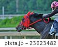 馬と騎手2 23623482
