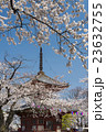 川多越大師 喜多院の桜と多宝塔 23632755