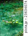モネの池 23634074