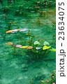 モネの池 23634075