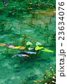 モネの池 23634076