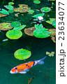 モネの池 23634077