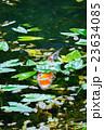 モネの池 23634085