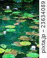 モネの池 23634089