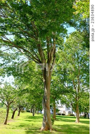 ねじれた木の夏の風景 23634890