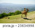 春 若草山 鹿の写真 23634998