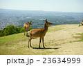 春 若草山 鹿の写真 23634999