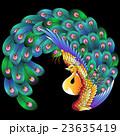 鳥 孔雀 ベクターのイラスト 23635419