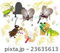 昆虫のコンサート 23635613