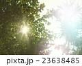 森林 林 森の写真 23638485