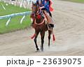 相馬野馬追い 騎馬 23639075