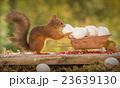 egg control 23639130