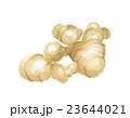 生姜 ショウガ 23644021