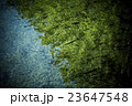 渓流の魚(ニジマス) 23647548