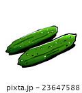 野菜 きゅうり 胡瓜のイラスト 23647588