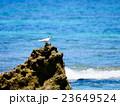 沖縄県南城市知念 コマカ島 23649524