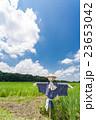 さいたま市 夏空と見沼田んぼの案山子 23653042