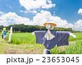 さいたま市 夏空と見沼田んぼの案山子 23653045