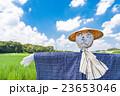 さいたま市 夏空と見沼田んぼの案山子 23653046