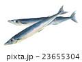 さんま 秋刀魚 魚のイラスト 23655304
