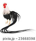 鶏 23668398